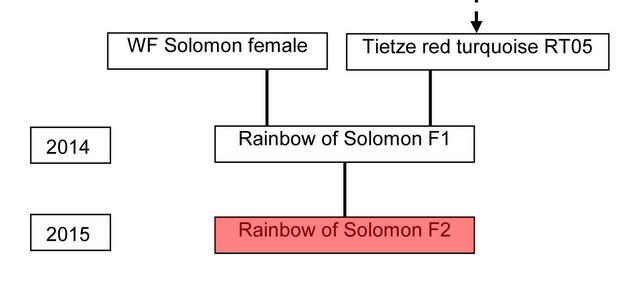 15022016_Stammbaum_Tietze.jpg
