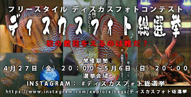 ディスカスフォト総選挙640.jpg