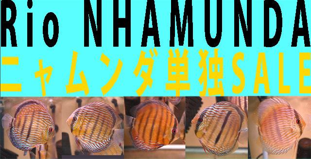 ニャムンダ単独SALE640.jpg