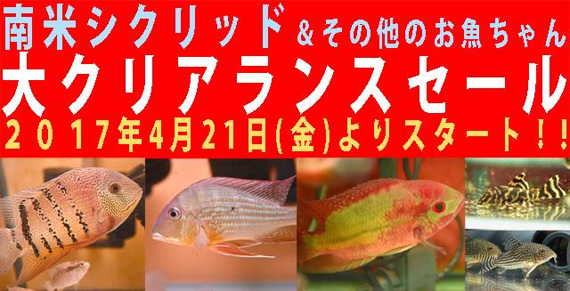 南米シクリッド&その他のお魚ちゃんセール640.jpg