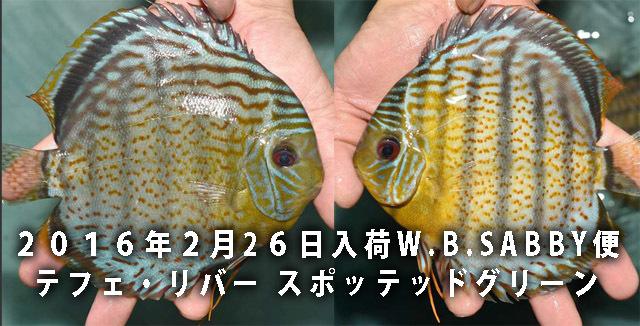 2月26日入荷テフェ・リバー640.jpg