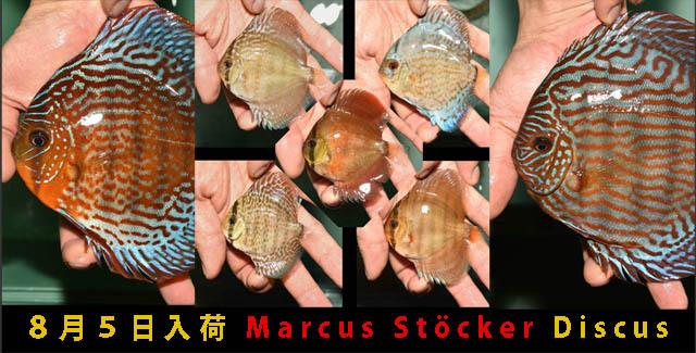 8月5日入荷 Marcus Stöcker Discus 640.jpg