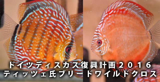 ティッツェ・ロートターキス2016・640.jpg