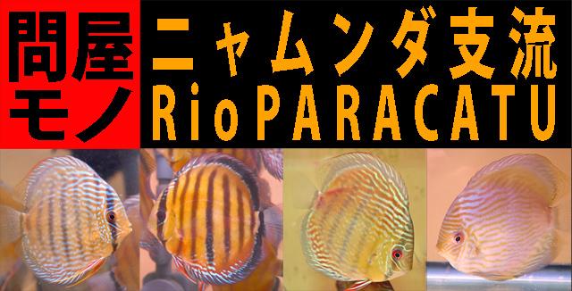 2017年12月12&23日入荷パラカトゥ640.jpg