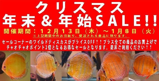 2018年クリスマス&年末年始SALE!!640.jpg